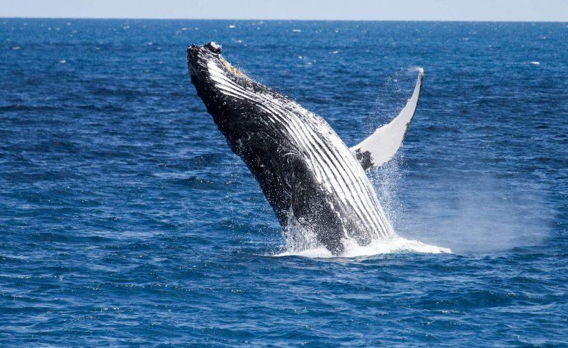 XRP-кит избавился еще от 10 млн токенов Ripple