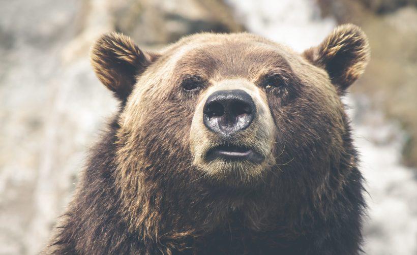 Выдающийся инвестор: медвежий рынок безопасен для институциональных инвесторов
