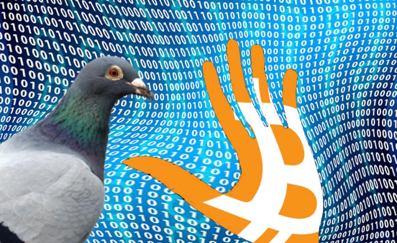 С помощью бага в сети Bitcoin мошенники создали 235 млн токенов Pigeoncoin