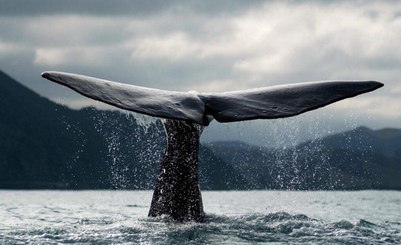 Как биткоин-киты манипулируют крипторынком