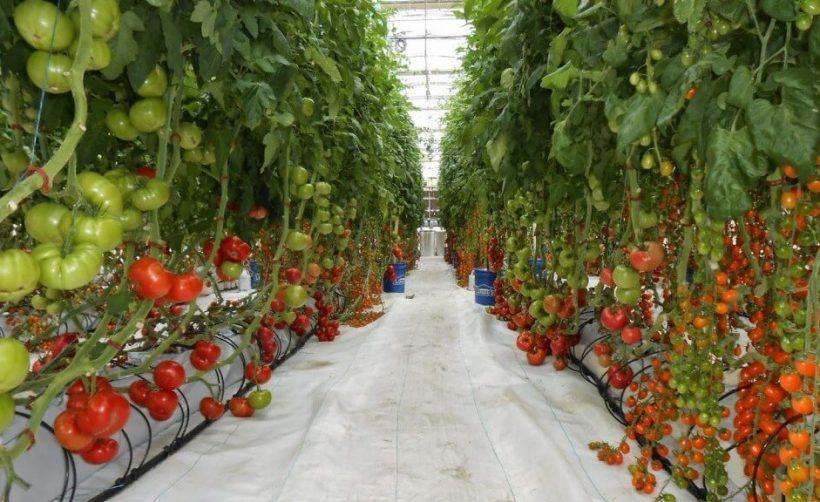 Майнинг биткоина и выращивание овощей — идеальная пара