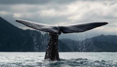 Биткоин-киты: кто это, и меняется ли их статус с течением времени?